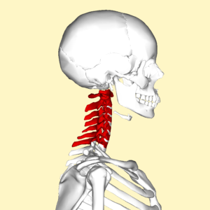 Cervical Spondylosis and Physiotherapy